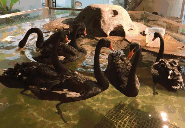 mocozoo萌可萌可室内动物主题公园
