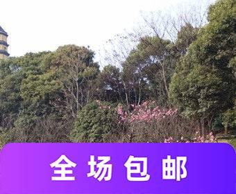 宝塔山公园