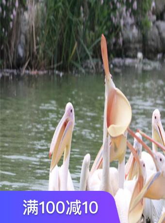 潘安湖鸟岛动物园