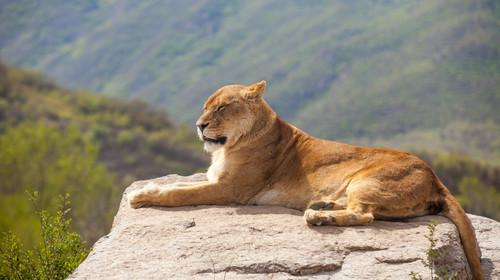八达岭野生动物园