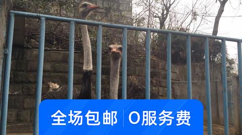 彩灯公园动物园