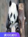 易胜博备用网址野生动物园