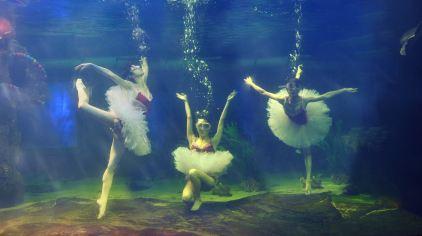水中芭蕾206x134
