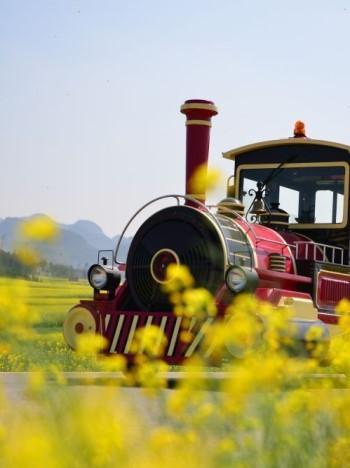 罗平国际油菜花文化节大型文艺演出