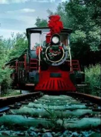 西青郊野公园亲子观光小火车票