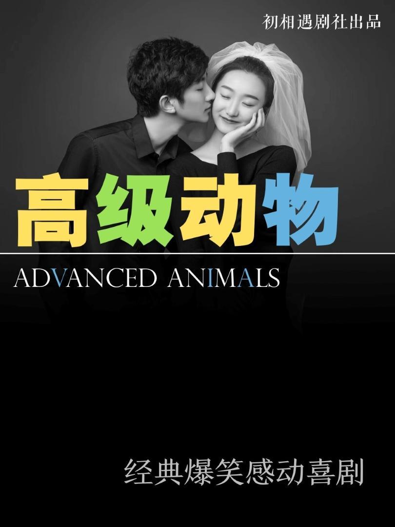 北京爆笑震撼精品喜剧《高级动物》