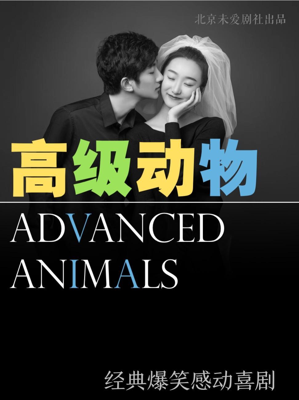 北京爆笑感动话剧《高级动物》