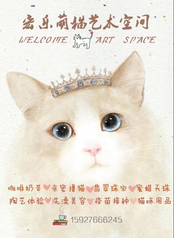 宏乐萌猫艺术空间