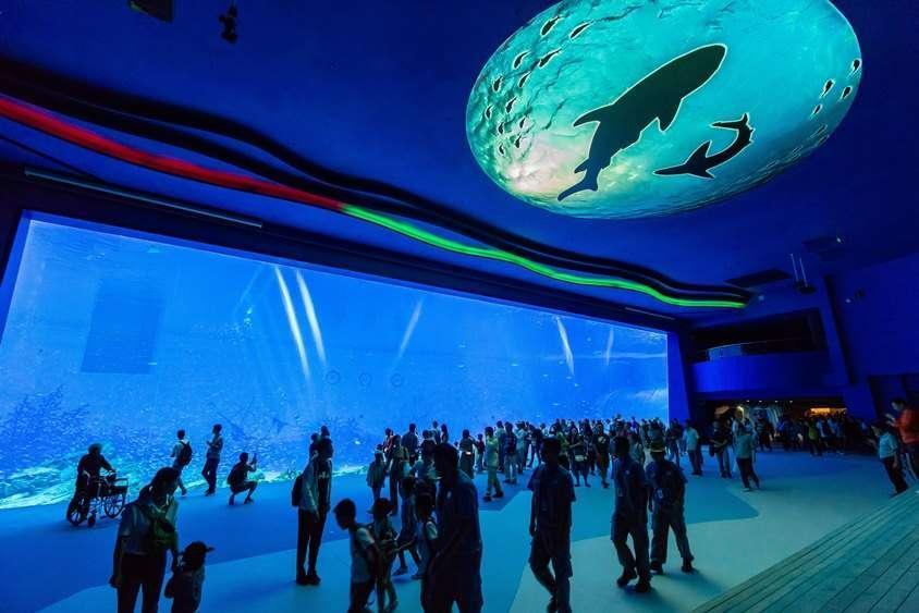 56407345_火山鲸鲨馆1.jpg