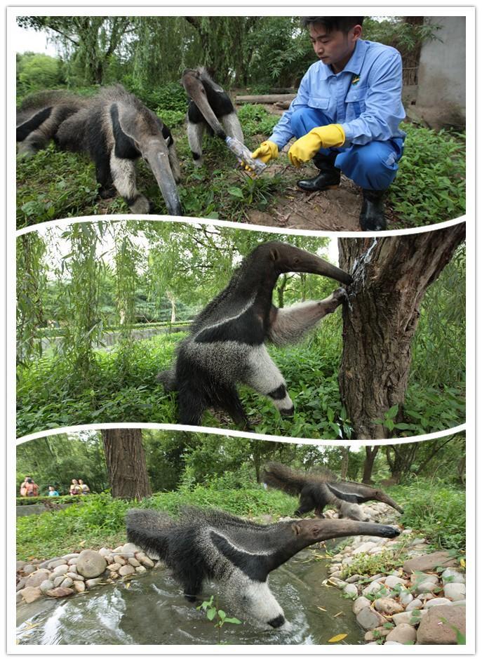上海野生动物园特色美食