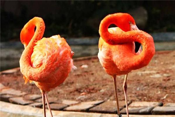 上海动物园上海动物园