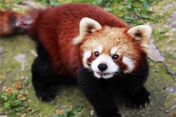 上海動物園節尾狐猴園