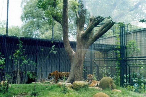 上海动物园猛兽生态园