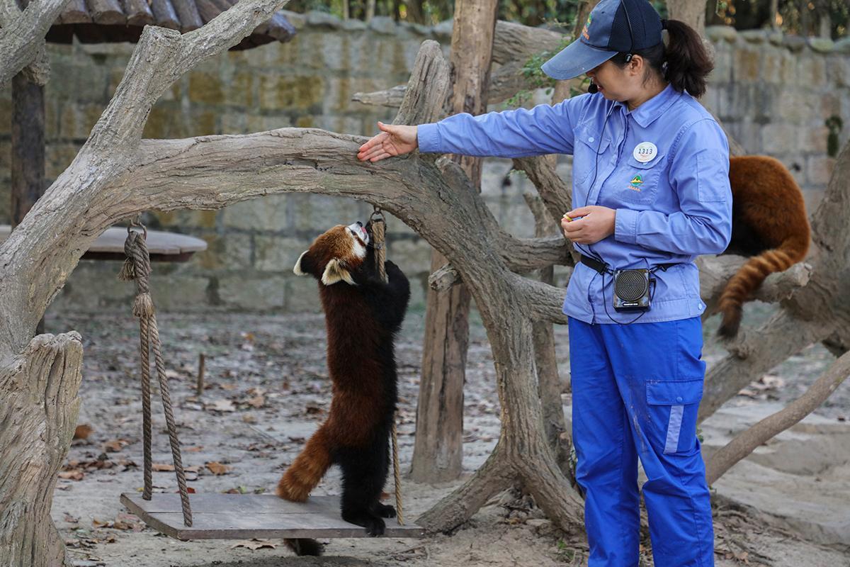 上海野生动物园科普讲解