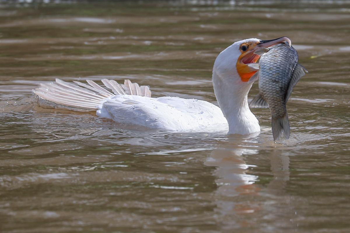 上海野生动物园水域探秘