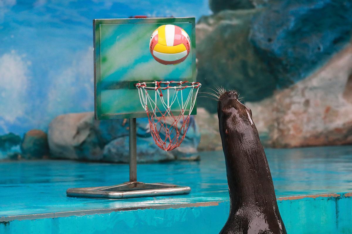 上海野生动物园免费演出