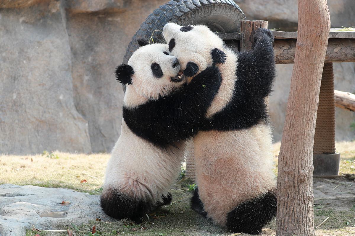 上海野生动物园热点二