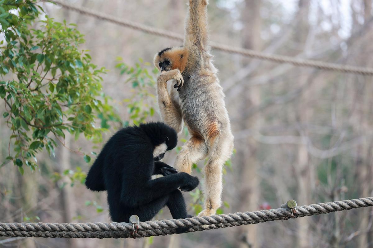上海野生动物园热点三